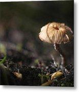 Sunlit Mushroom Metal Print