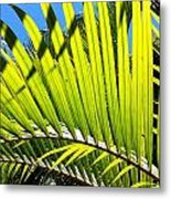 Sunlit Palm Tree  Metal Print