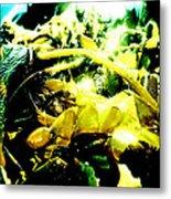 Sunlit Seaweed Metal Print