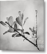Sunlit Sprig Of Leaves In Black And White Metal Print by Natalie Kinnear