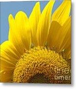 Sunlit Sunflower Metal Print