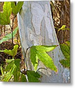 Sunlit Sycamore Leaves In Andreas Canyon In Indian Canyons-ca Metal Print