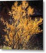 Sunlit Tree In Palo Duro Canyon 110213.06 Metal Print
