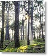 Sunlit Trees Metal Print