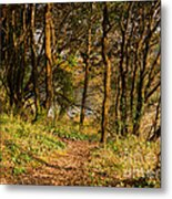 Sunlit Woods In Late Autumn Metal Print