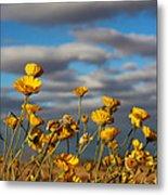 Sunlit Yellow Wildflowers Metal Print