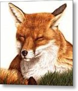 Sunnin' Red Fox Metal Print