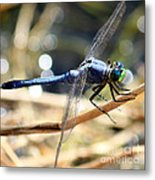 Sunning Blue Dragonfly Square Metal Print
