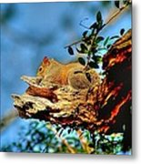Sunning On My Back Porch Metal Print