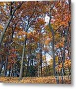 Sunny Autumn Day 3 Metal Print