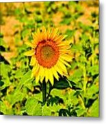 Sunny Metal Print by BandC  Photography