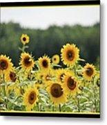 Sunny Days 8466 Metal Print
