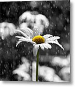 Sunny Disposition Despite Showers Metal Print