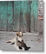 Dog Enjoying A Sunny Doorstep Metal Print