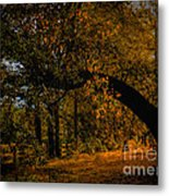 Sunny Fall Afternoon Metal Print
