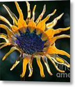 Sunny Glass Metal Print