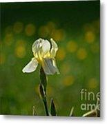 Sunny Iris Metal Print