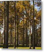 Sunny Larch Grove Metal Print