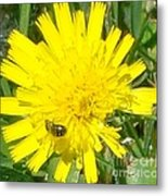 Sunny Lunch Metal Print