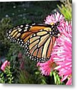 Sunny Side Monarch Metal Print