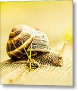 Sunny Snail Metal Print