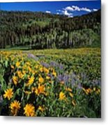 Sunny Spring Day Metal Print