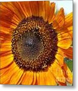 Sunny Sunflower Metal Print by Annette Allman