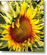Sunny Sunflower Metal Print