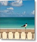 Sunny Tropical Seashore With Gull Metal Print