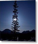 Sunny Winter Pine Metal Print