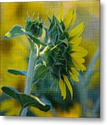 Sunny With Texture Metal Print