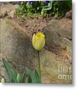 Sunny Yellow Tulips Series  Picture B Metal Print