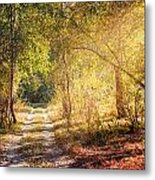 Sunray In The Autumn Forest Metal Print