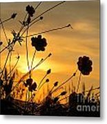 Sunrise 365 28 Metal Print