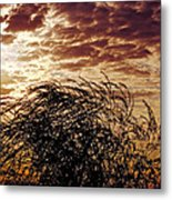 Sunrise And Lacy  Tree Metal Print
