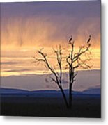 Sunrise And Rain Metal Print