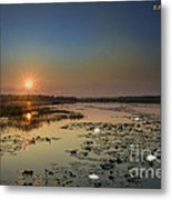 Sunrise And Water Lilies Metal Print