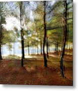 Sunrise At The Magic Forest Metal Print