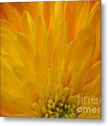Sunrise Dahlia Abstract Metal Print