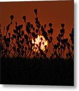 Sunrise In South Texas Metal Print
