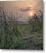 Sunrise Landscape In Summer Looking Through Wild Thistles And Gr Metal Print