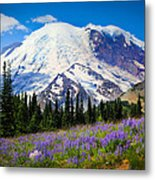 Sunrise Lupines Metal Print