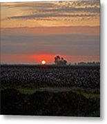 Sunrise On The Cotton Field Metal Print