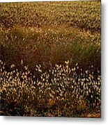 Sunrise On Wild Grass Metal Print