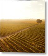 Sunrise Over The Vineyard Metal Print