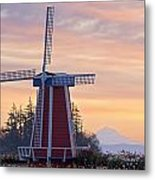 Sunrise Over Wooden Shoe Tulip Farm And Metal Print
