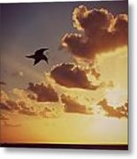 Sunrise Seagull Metal Print