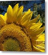 Sunrise Sunflower Metal Print