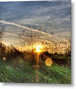 Sunrise Through Grass Metal Print