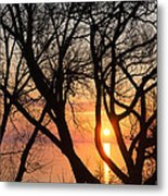 Sunrise Through The Chaos Of Willow Branches Metal Print